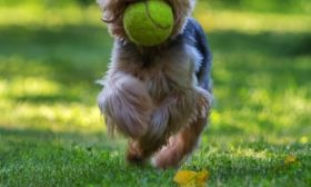 Miky a tenisák