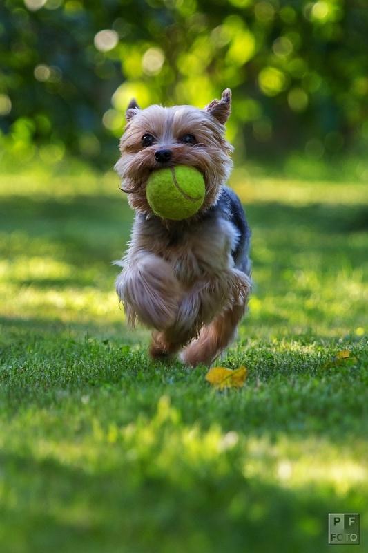 Miky a tenisák | Petr Fiala