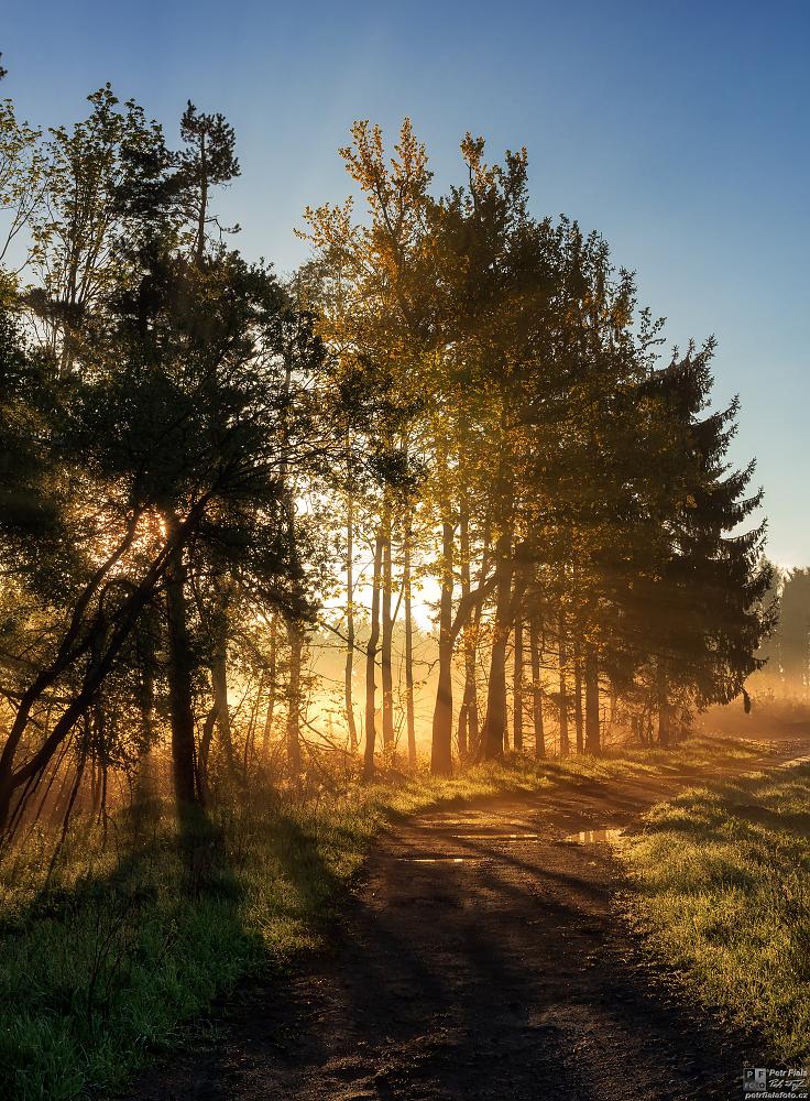 Cestička lesem | Petr Fiala