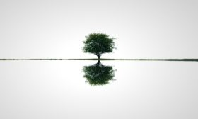 Strom naděje