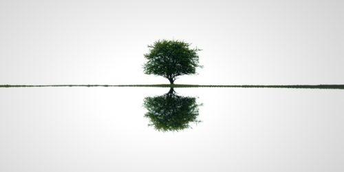 Strom naděje | Petr Fiala