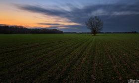 Sám uprostřed pole
