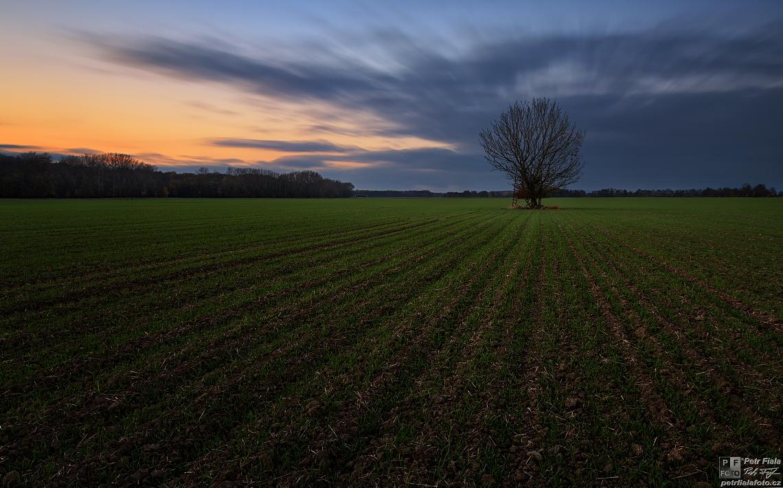 Sám uprostřed pole | Petr Fiala