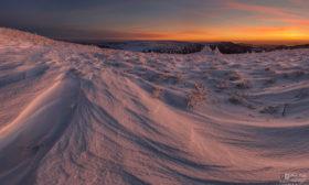 Mlsné sněhové jazyky