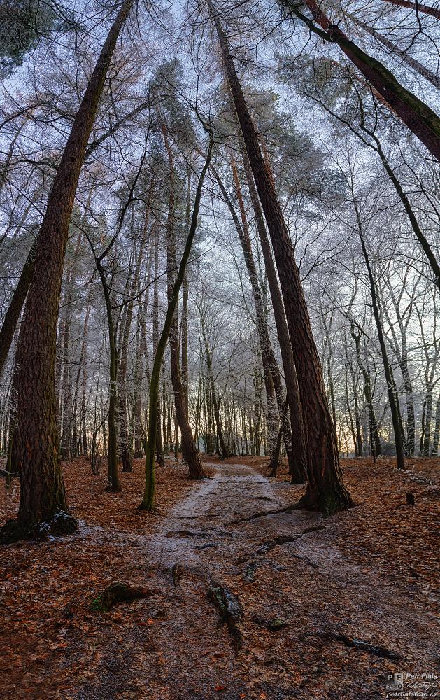 Lesní cesta | Petr Fiala