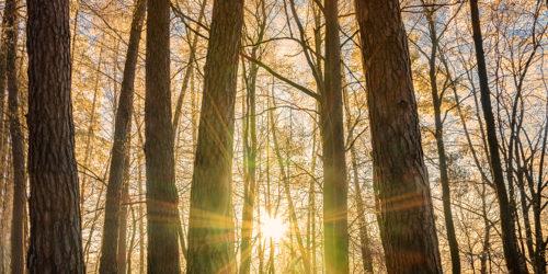 Lesní paprsky   Petr Fiala