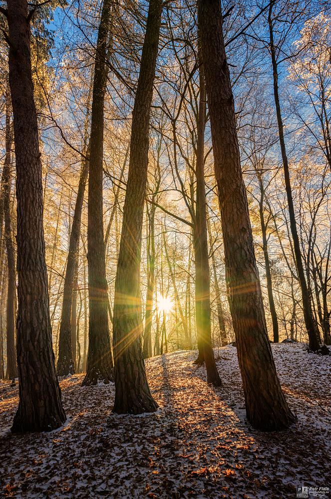 Lesní paprsky | Petr Fiala