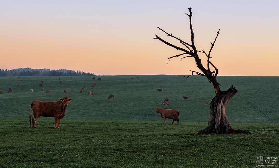 Pastviny | Petr Fiala
