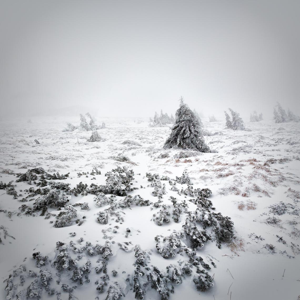 V zajetí zimy | Petr Fiala