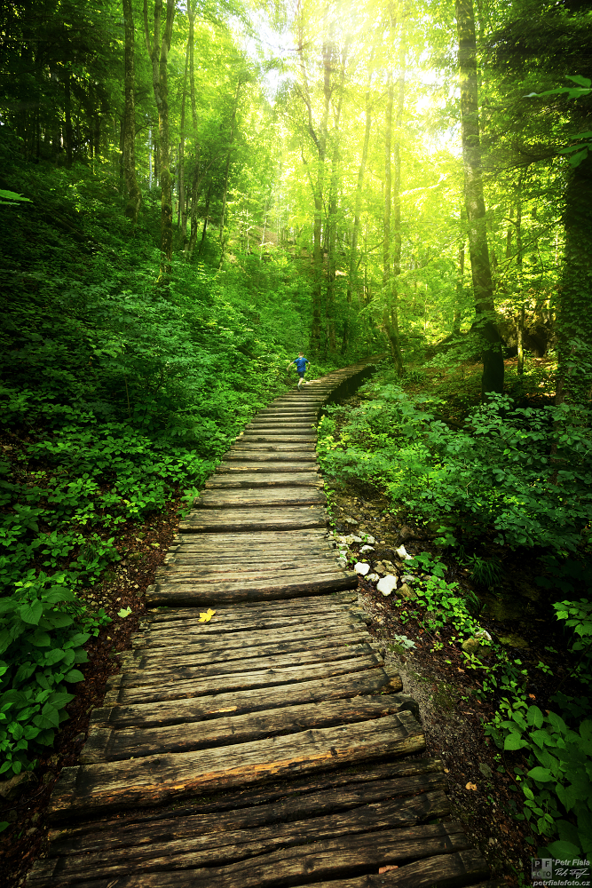 Lesní cestičkou | Petr Fiala
