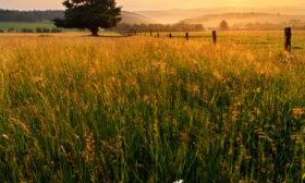 Pastviny Stránské