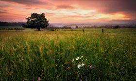 Pastviny po západu
