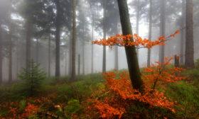 Podzimní kontrasty